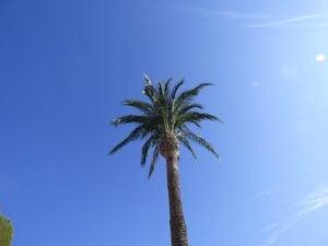 vb-palm-tree